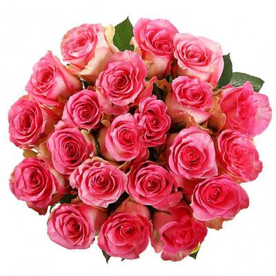21  роза сорта Малибу 70 см