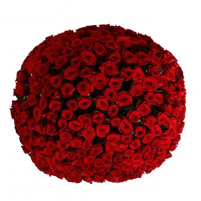 251  роза  в корзине