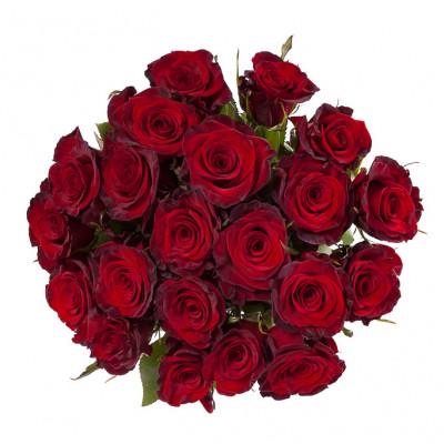21 роза сорта Престиж 50 см