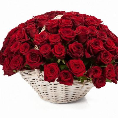 101  Красная роза  в корзине, сорт - ред наоми