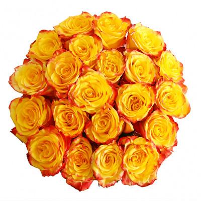 21 Эквадорская роза 60 см