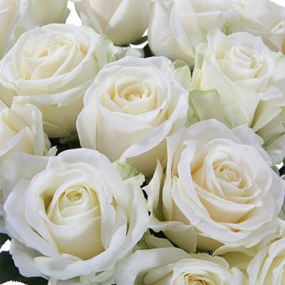 21 Белая роза сорта Аваланж 50 см