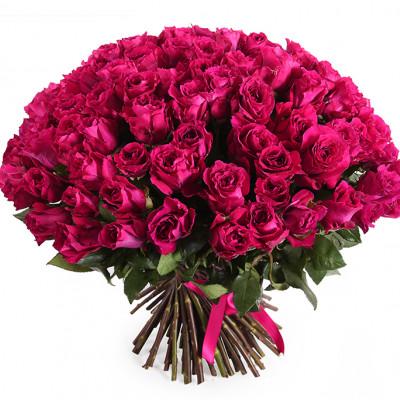 101 бордовая роза 70 см