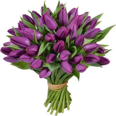 Тюльпаны Фиолетовые 43 шт