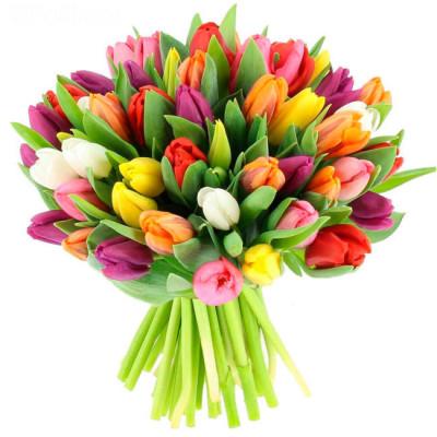 Тюльпаны Микс 51 шт