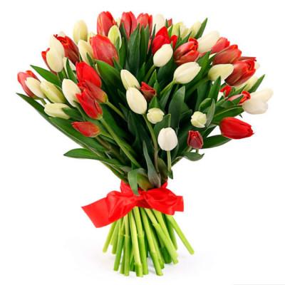 Тюльпаны Красные и Белые 55 шт